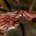 tvář podzimu