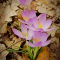Jasná zpráva přírody - jaro přichází