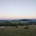 #41/52 - ráno s krávama