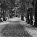 #48/52 - park Stromovka