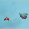 prvni jarni plavec